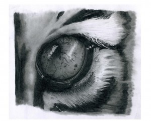 tiger_eye_by_andybuck